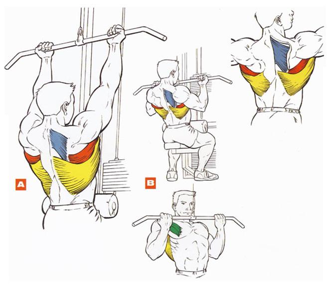 Диеты. спортвинео питание. накачать грудь. накачать кисть. накачать плечи.